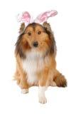 Perro de Pascua foto de archivo
