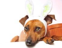 Perro de Pascua Imágenes de archivo libres de regalías