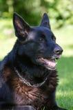 Perro de pastor al aire libre. Fotos de archivo
