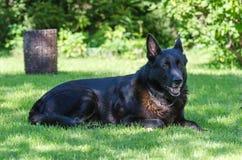 Perro de pastor al aire libre. Imagenes de archivo
