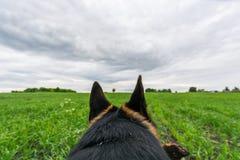 Perro de pastor alemán que juega y que corre Point of View Fotografía de archivo libre de regalías