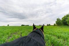 Perro de pastor alemán que juega y que corre Point of View Imagen de archivo libre de regalías