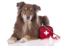 Perro de pastor australiano con el equipo de primeros auxilios fotografía de archivo
