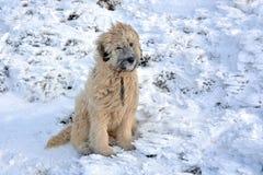 Perro de pastor hermoso fotos de archivo