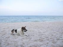 Perro de pelo corto blanco y negro que se acuesta en la arena de la playa por el mar imagen de archivo libre de regalías