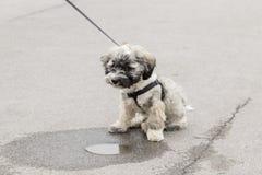 Perro de perrito Imágenes de archivo libres de regalías