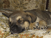 Perro de perrito Fotografía de archivo