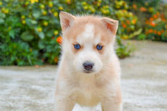 Perro de perrito Fotos de archivo