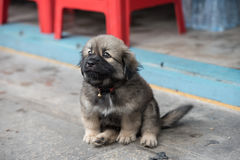 Perro de perrito Foto de archivo