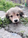 Perro de perrito fotos de archivo libres de regalías