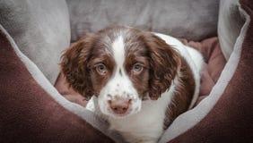 Perro de perrito adorable Fotografía de archivo libre de regalías
