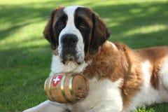 Perro de perrito al aire libre en la hierba Imágenes de archivo libres de regalías