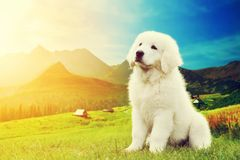 Perro de perrito blanco lindo que se sienta en montañas Imágenes de archivo libres de regalías
