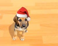 Perro de perrito con el sombrero de santa Foto de archivo libre de regalías