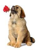 Perro de perrito con la flor fotos de archivo libres de regalías