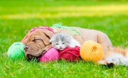 Perro de perrito de Burdeos y gatito recién nacido que duermen junto en hierba verde Foto de archivo libre de regalías
