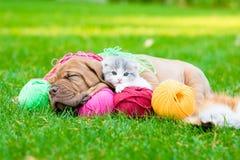 Perro de perrito de Burdeos y gatito recién nacido que duermen junto en hierba verde Imágenes de archivo libres de regalías