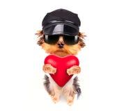 Perro de perrito de la tarjeta del día de San Valentín del amante con un corazón rojo Foto de archivo libre de regalías