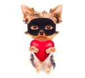 Perro de perrito de la tarjeta del día de San Valentín del amante con un corazón rojo Imagen de archivo libre de regalías