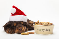 Perro de perrito del perro de aguas en sombrero de la Navidad por el cuenco de galletas imagenes de archivo