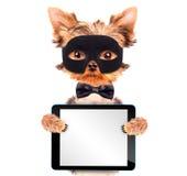 Perro de perrito del superhéroe con PC de la tableta Foto de archivo libre de regalías