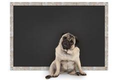 Perro de perrito divertido elegante del barro amasado que se sienta delante de la pizarra en blanco fotografía de archivo libre de regalías