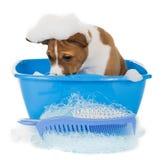 Perro de perrito en birra Imágenes de archivo libres de regalías