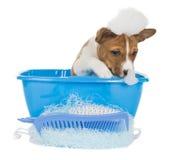Perro de perrito en birra Imagenes de archivo