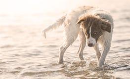 Perro de perrito en el agua foto de archivo