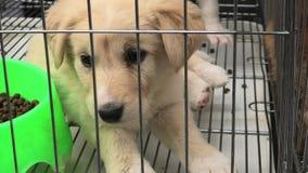 Perro de perrito en jaula almacen de metraje de vídeo