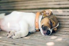 Perro de perrito joven el dormir Imagenes de archivo