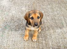 Perro de perrito lindo foto de archivo libre de regalías