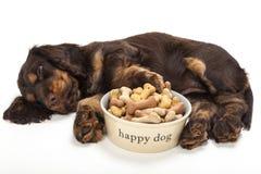 Perro de perrito lindo de cocker spaniel que duerme por el cuenco de galletas foto de archivo libre de regalías