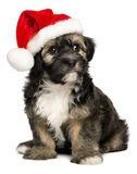Perro de perrito lindo de Havanese de la Navidad con un sombrero de Santa Fotografía de archivo