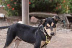 Perro de perrito lindo que mira la cámara Foco selectivo en ojos y profundidad del campo baja Imagen de archivo