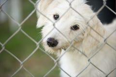 Perro de perrito lindo que mira a través de la cerca Imagenes de archivo
