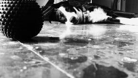 Perro de perrito que se acuesta y agujereado foto de archivo