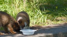 Perro de perrito sin hogar de la raza mezclada almacen de metraje de vídeo