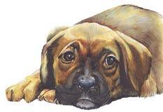 Perro de perrito triste Imagen de archivo libre de regalías