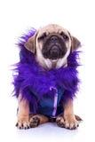 Perro de perrito vestido del barro amasado en blanco Fotos de archivo