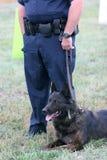 Perro de policía Imagen de archivo libre de regalías