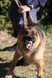 Perro de policía enojado Imagen de archivo