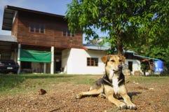 Perro de protección de la casa Imagen de archivo libre de regalías