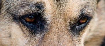 Perro de protector Imágenes de archivo libres de regalías