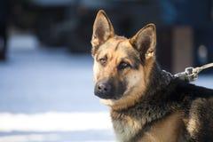 Perro de protector Imagenes de archivo