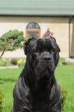 Perro de protector en la yarda Fotos de archivo