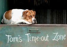 Perro de reclinación Imagen de archivo
