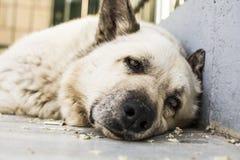Perro de reclinación fotografía de archivo libre de regalías