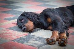 Perro de reclinación Fotos de archivo