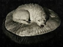 Perro de reclinación fotos de archivo libres de regalías
